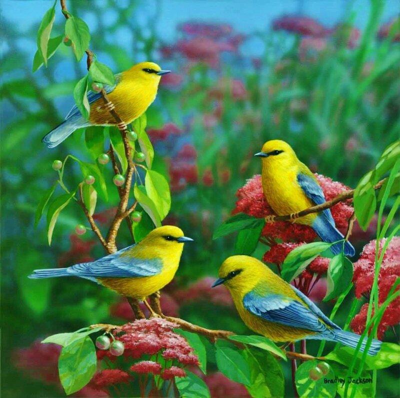 oiseau k