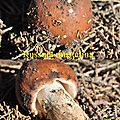 Russula mustelina