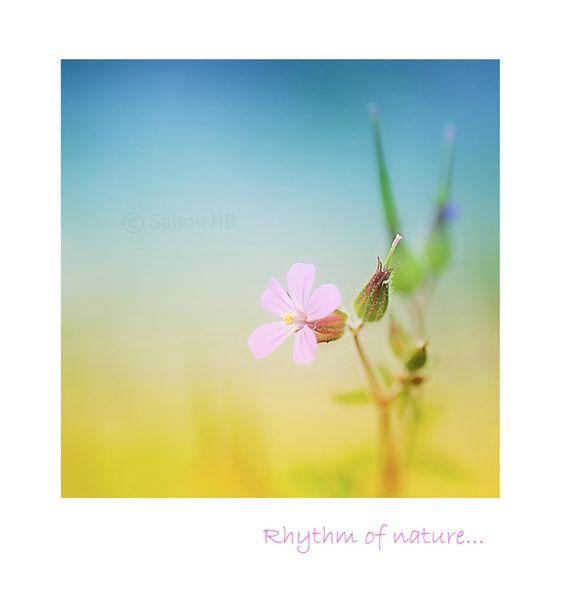 Fleur-Blog1