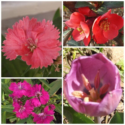 Fleurs du jardin (9)