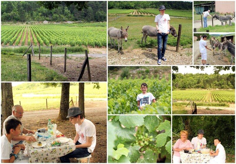 0 déjeuner dans les vignes
