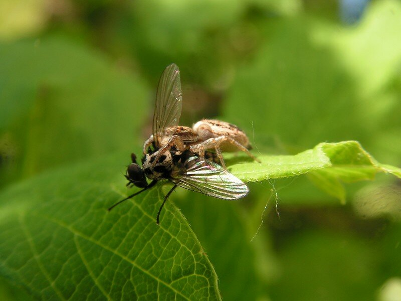 belles photos d'insectes 001