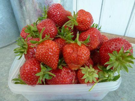 16-fraises (2)