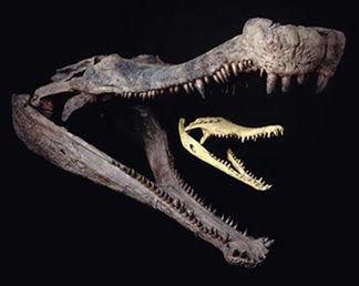 Crocodiliens_Sarcosuchus