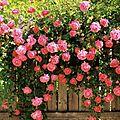 Mes jolie Fleurs