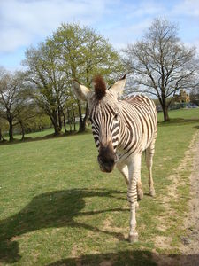 Safari_Parc_le_5_avril_09_093