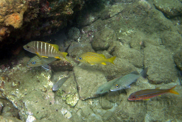 Photographie-Nature-Fond marin-Poisson-Martinique14