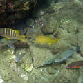 Poissons_0342_copie