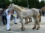 Caline du Bois Planté - 25 Juin 2013 - Concours d'élevage local - Thérouanne