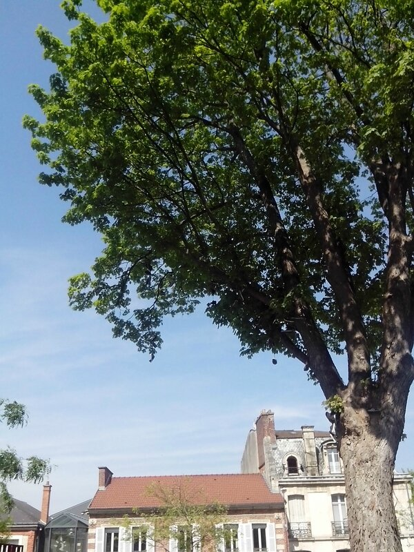 arbre chaussures