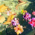 A (f)fleur(es) d'eau... petite histoire vécue