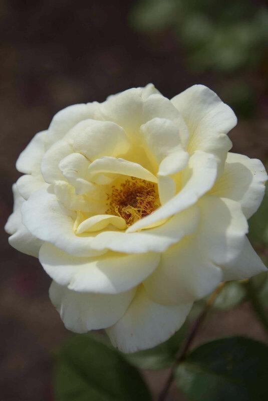 fleur pour nelly 2 - 1