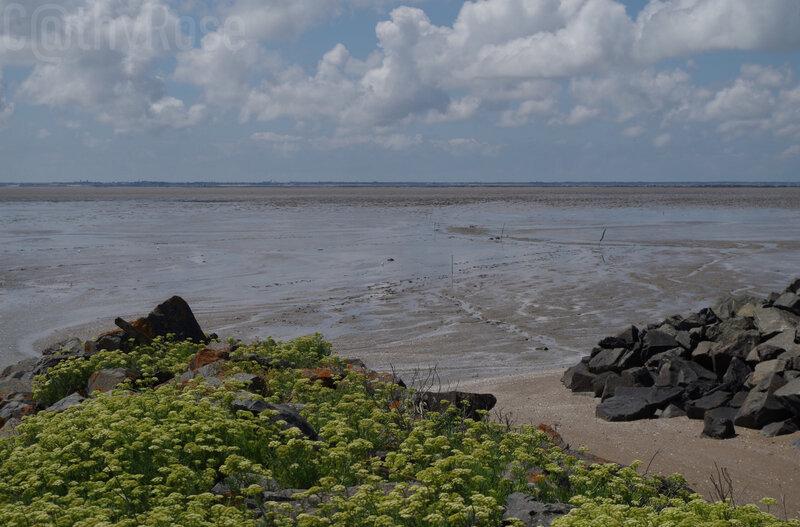 && Port des Barques la côte (2)