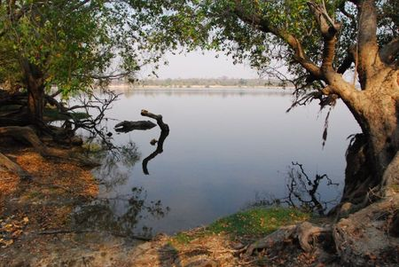 Zambie (706)