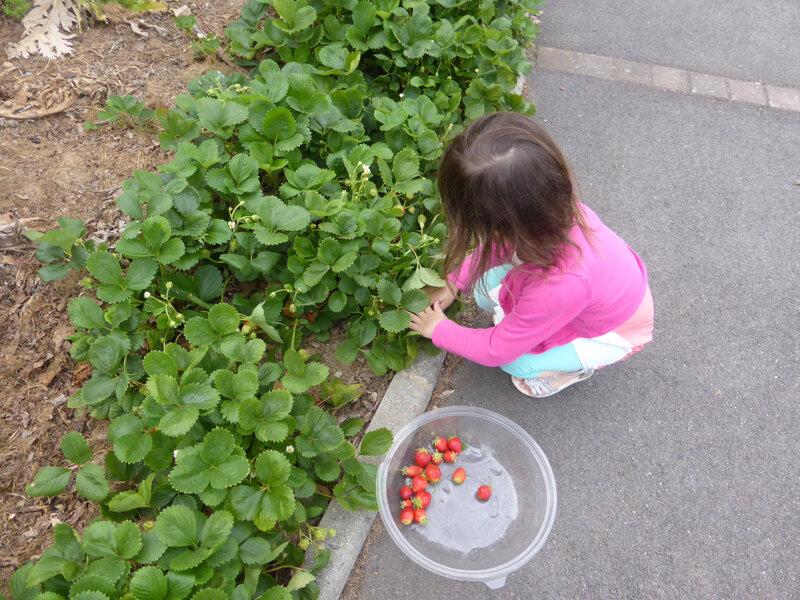 17-fraises (2)