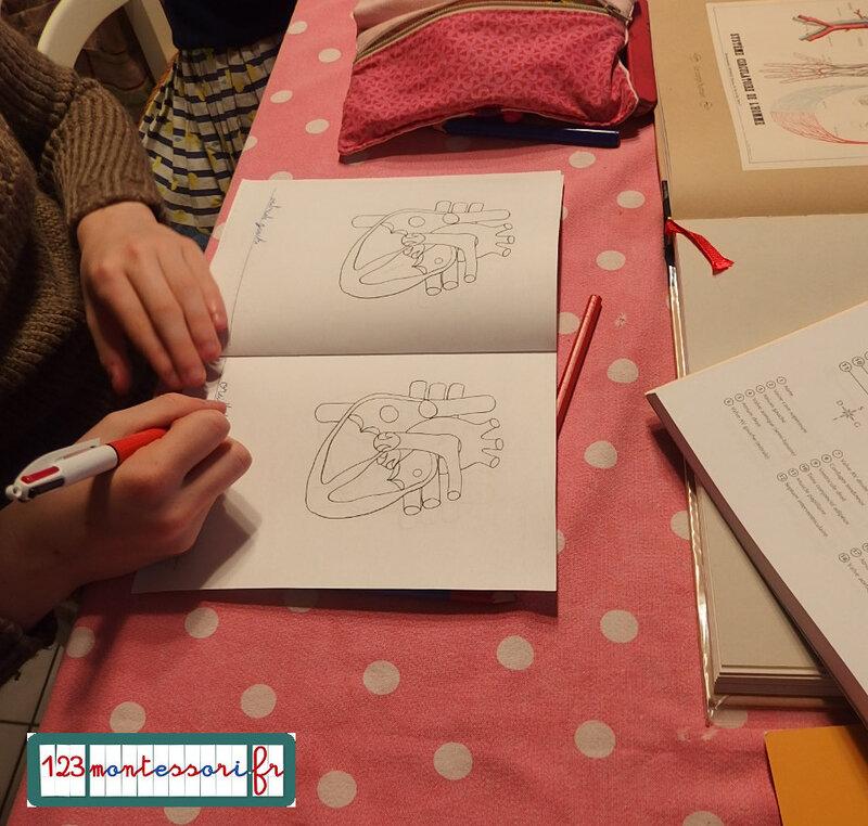 coeur blog 7