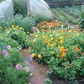 2008 08 19 Mon jardin innondé aprés l'orage