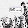 Dalmatien pas net...