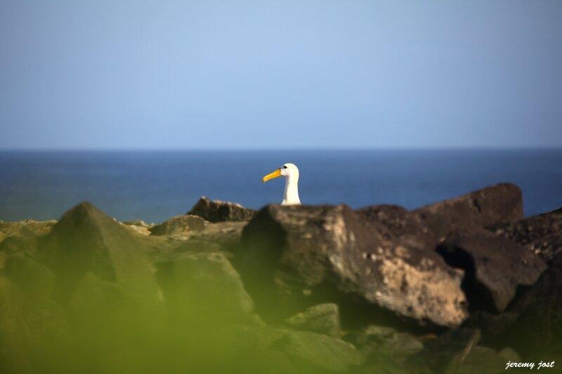 aperçu d'un albatros