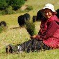 Vielle dame et ses vaches
