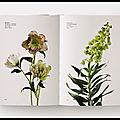 guide des fleurs par couleurs 4