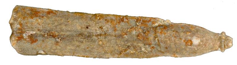 Hemicidaris crenularis EM40178r