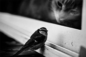 chat-et-sourie-noir-et-blanc