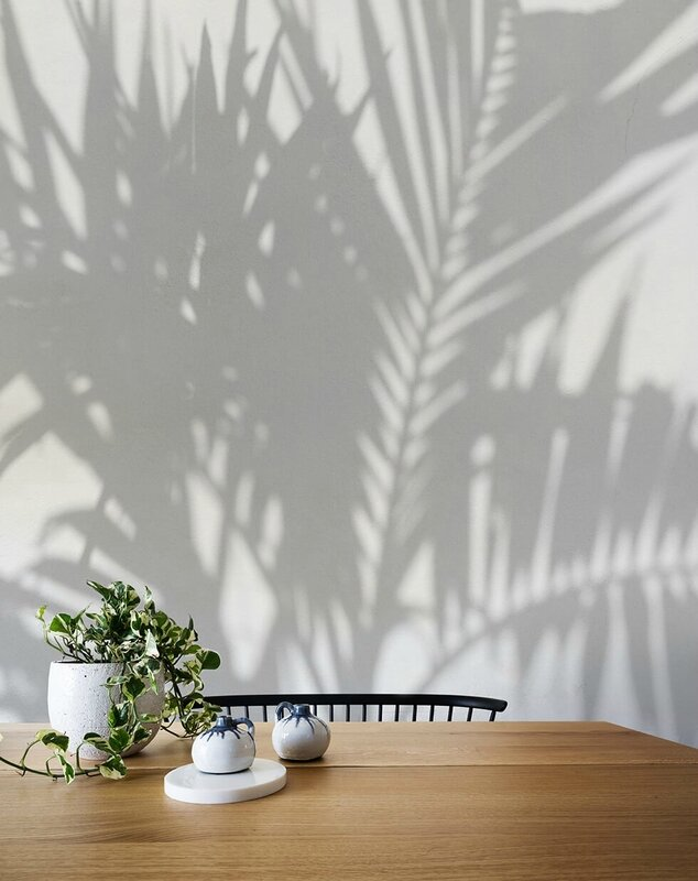 AFDC148_PalmShadow_article