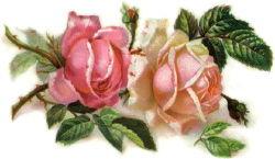 romantic_pink_roses