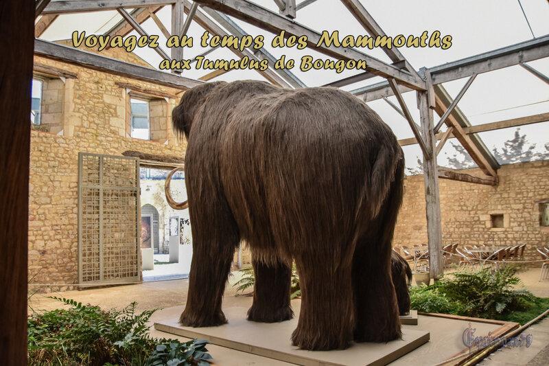 Voyagez au temps des Mammouths aux Tumulus de Bougon (4)