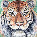 Dessin aux pastels secs : tigre