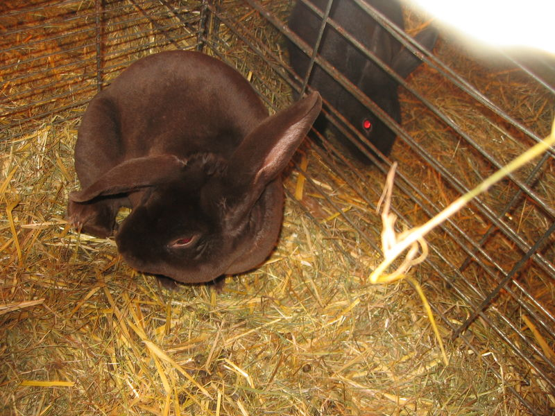 Jeannot lapin