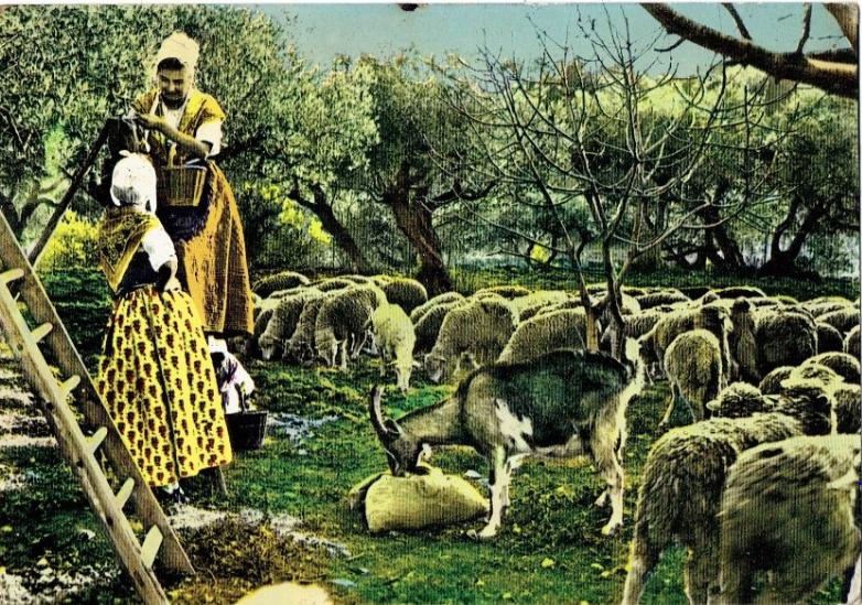 La cueillette des olives-Folklore