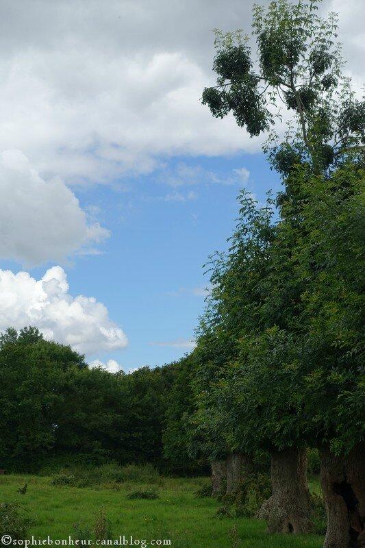 champ et ciel