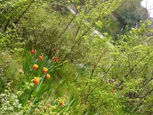 buttes_chaumont_tulipes