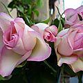 Il y a déjà quelques jours que je ne vous ai pas posté des citations... des fleurs...