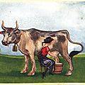 Histoire de lait