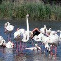 Flamants roses 07
