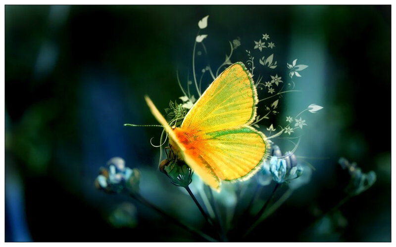 81879__beautiful_butterfly_p_1_