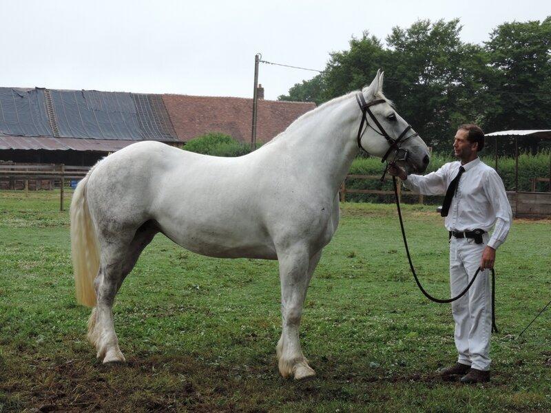 Abba du Petit Hautier - 2 Juillet 2017 - Concours d'élevage local - Menerval (76) - 5e (Non Suitées)