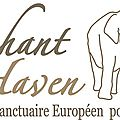 Elephant haven : « une maison de retraite pour les vieux éléphants »