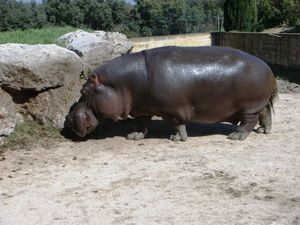 zoo_avril_2011__7_