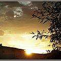 Lever soleil 31081514