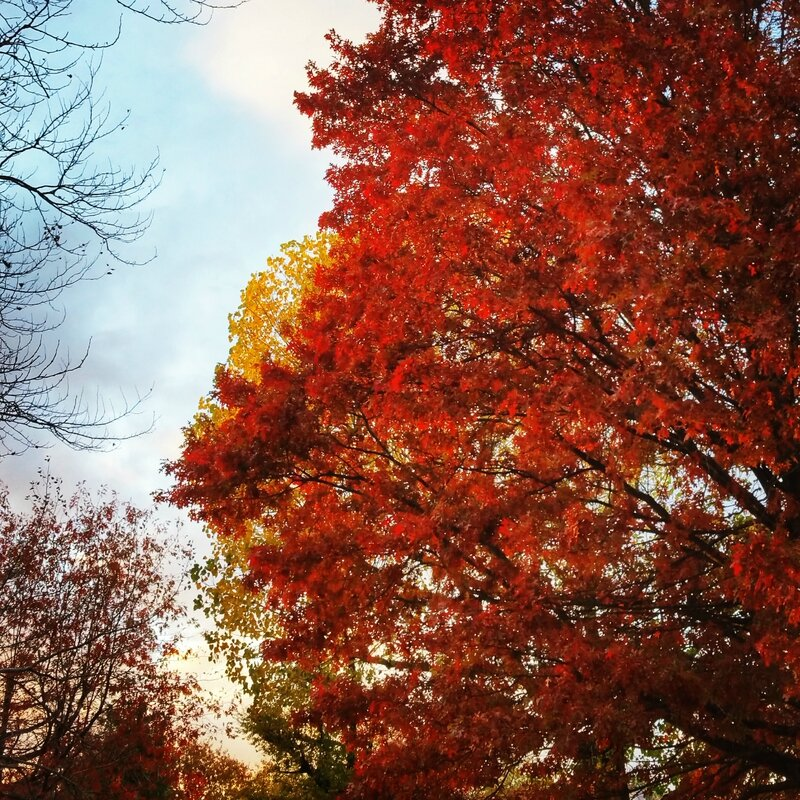 automne-nantes-rouge-nature-red-bonnie-parker-creations
