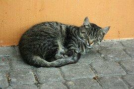 chat agé2
