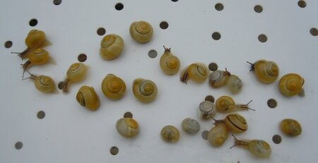 Course_escargots
