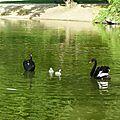 Les vilains petits canards 1