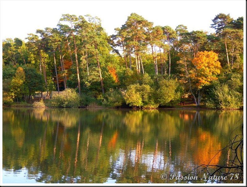 L'étang d'Or (16)