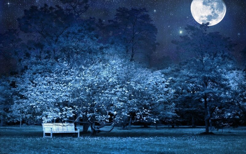 night-bench-park-trees-stars-full-moon-sky-light-darkness