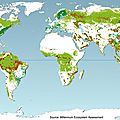 world deforestation monde déforestation